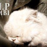 Goodbye Bimbi