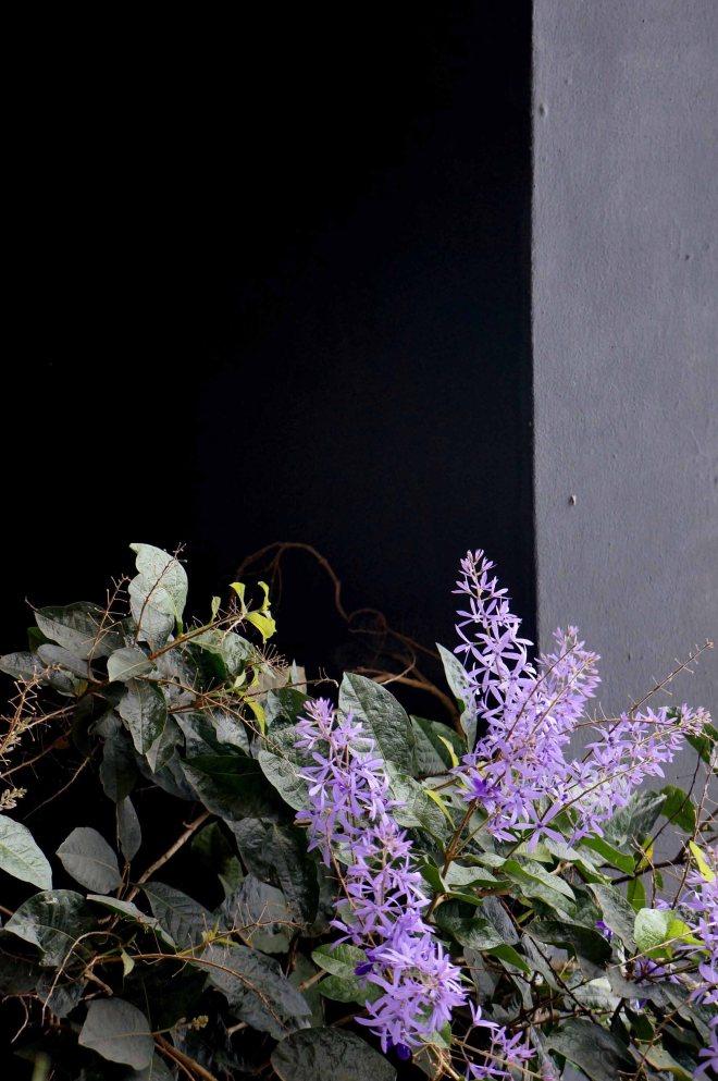 Flowers10