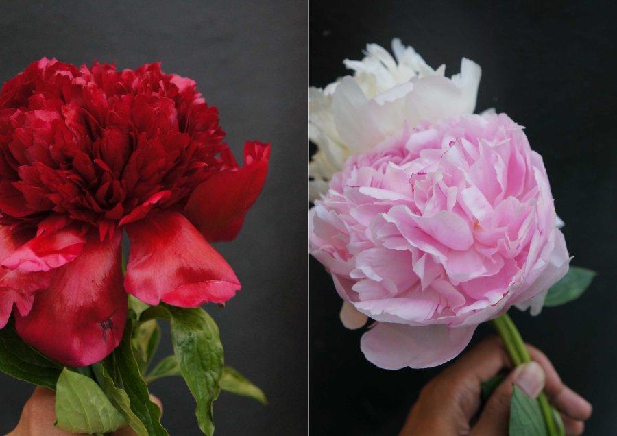 Apericena-Flower2