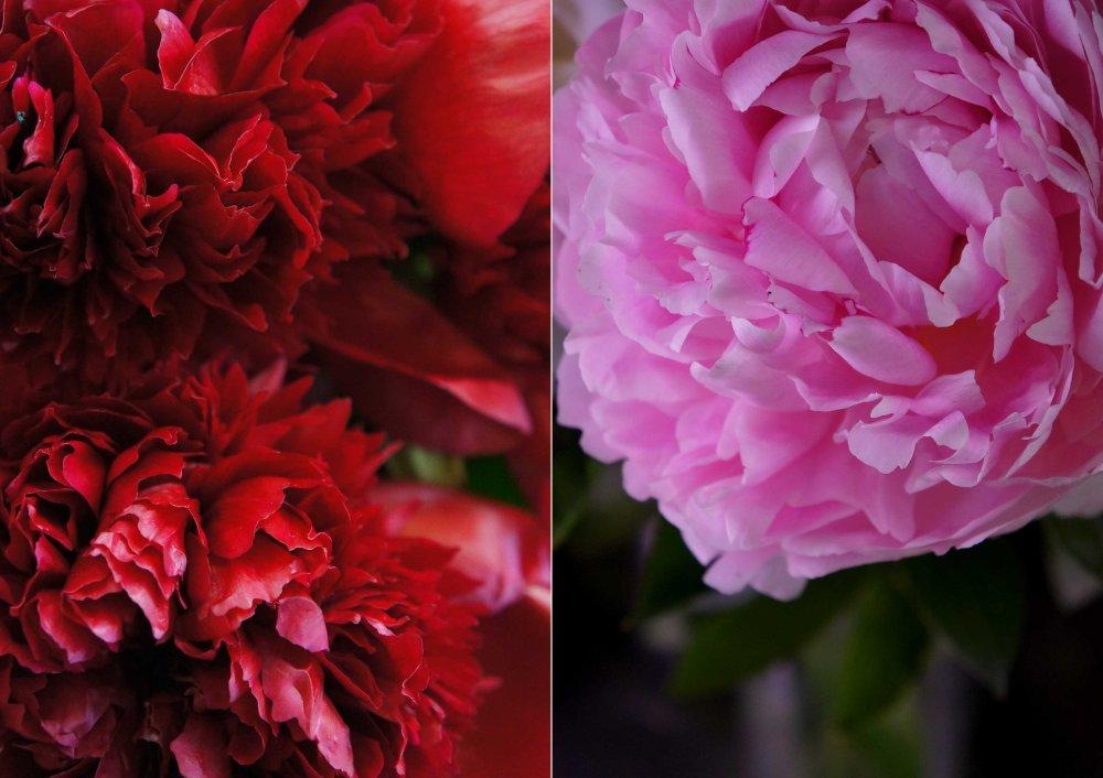 Apericena-Flower3