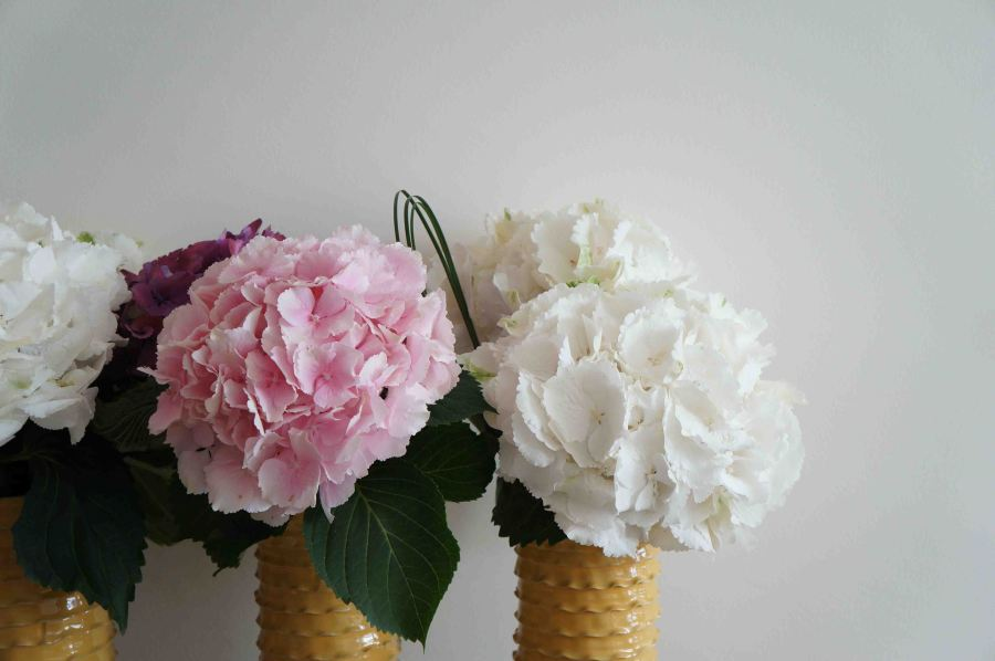 Apericena-Flowers8