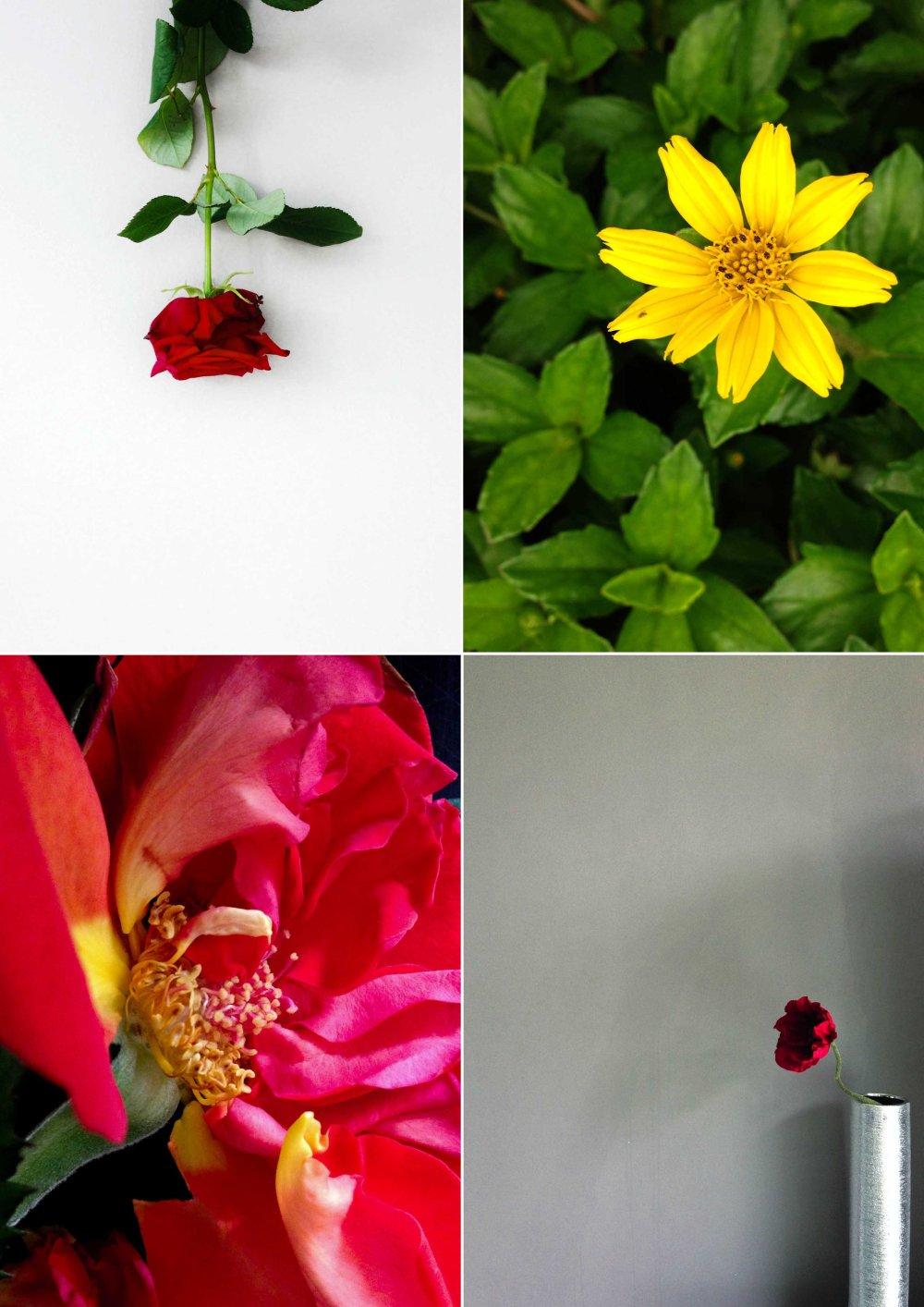iPhone-Flowers