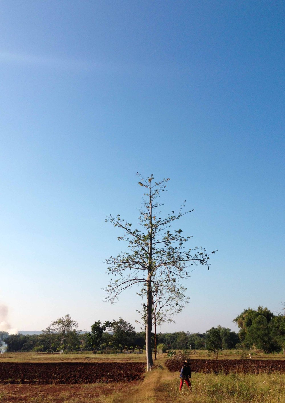 iPhone-Scenery1