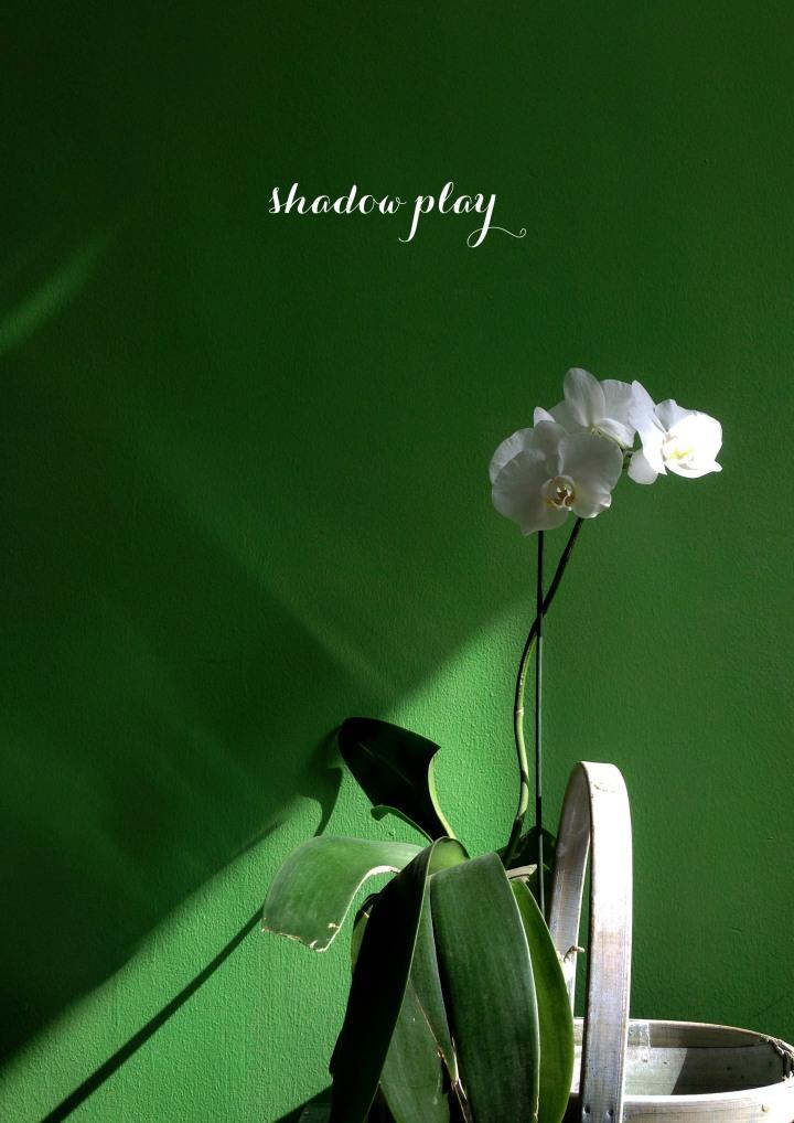 Shadowplay1