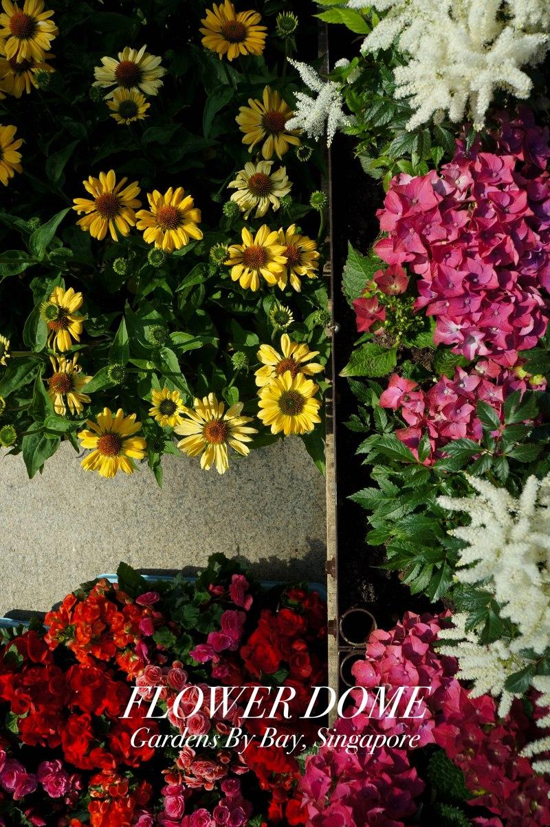 FlowerDome1