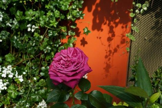 FlowerDome13