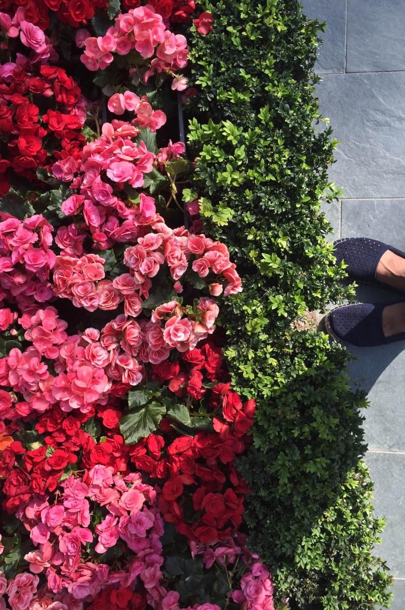 FlowerDome14