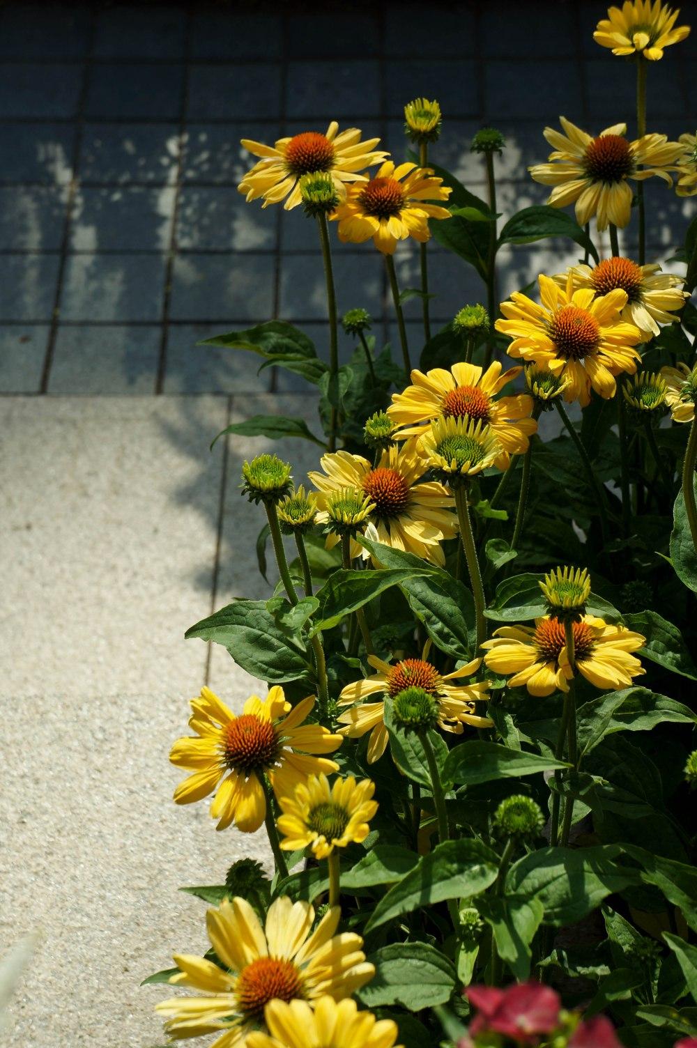 FlowerDome3