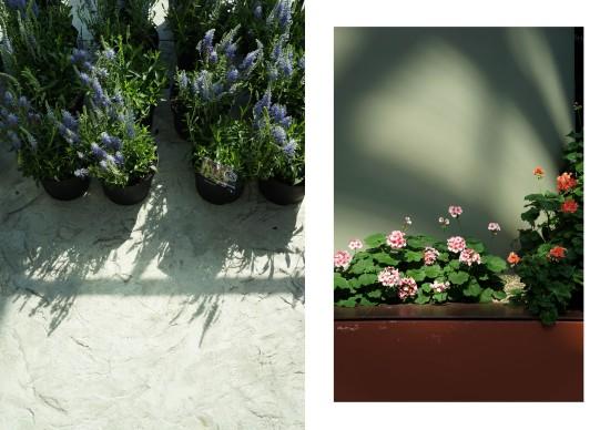 FlowerDome5