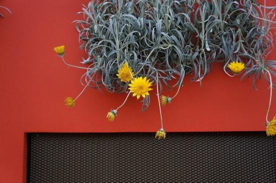 FlowerDome6b