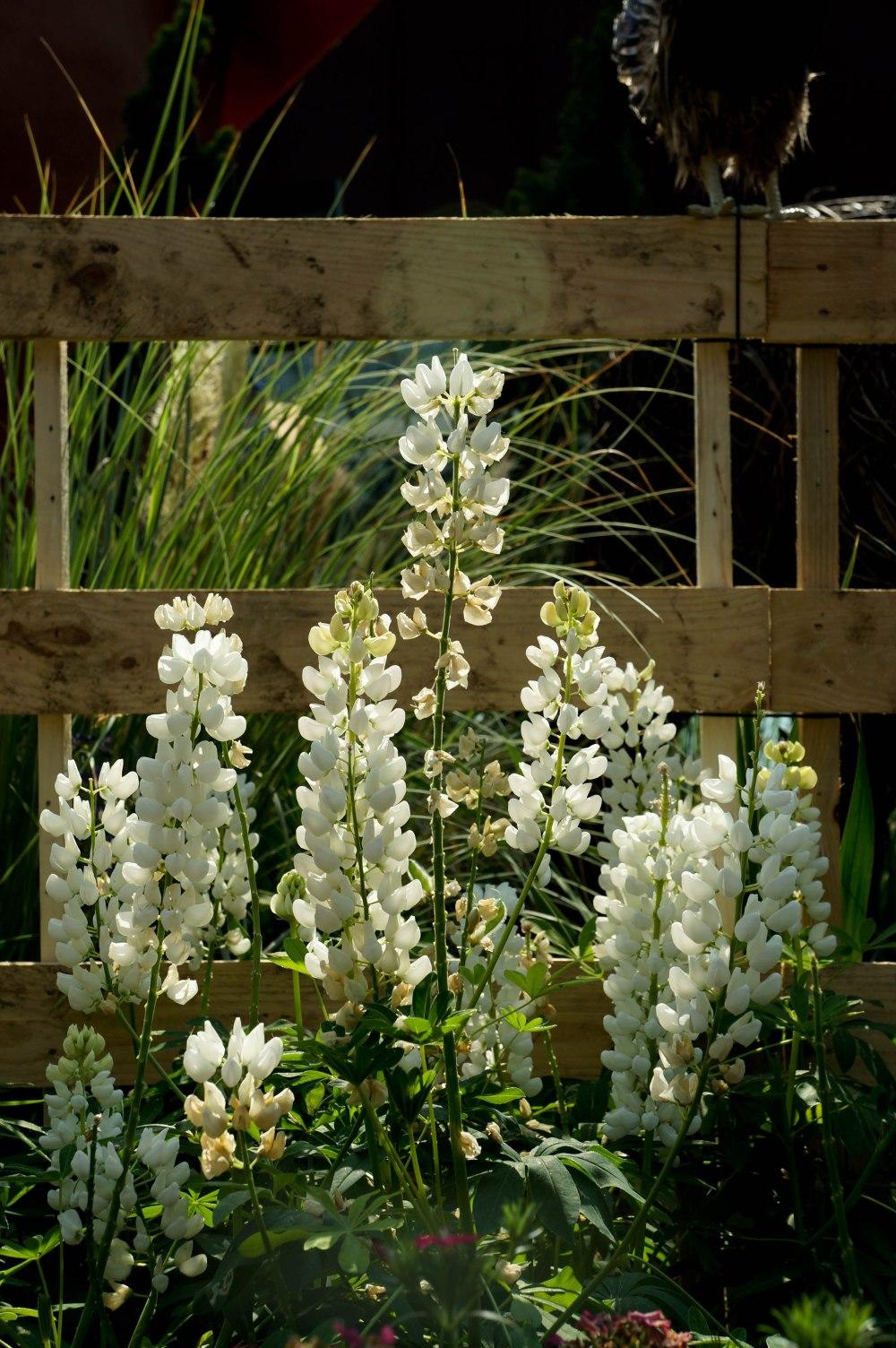 FlowerDome7